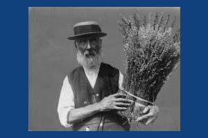 Mr Henry Fowler, the last of the lavender growers