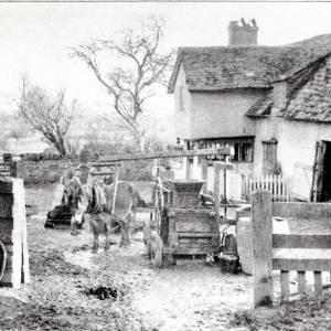 Cider Making, Herefordshire, 1899