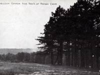 Wimbledon Common: Roman Camp