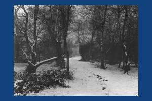 Winter scene, Wimbledon Common