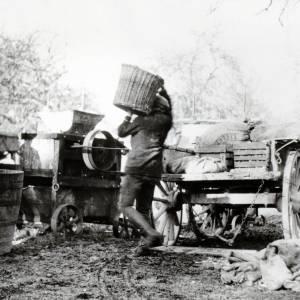 Cider Making, Bartestree