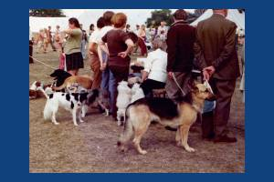 Dog show at the Merton Show, Morden Park