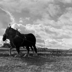 October 1958 H Samuel of Ledbury was the lone entrant in the horse ploughing class of the Llanwarne and District Agricultural Improvement Society match at Hoarwithy.