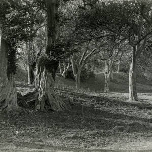 Fownhope Capler Camp from within, 1923