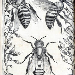 Extracts from the Alfred Watkins beekeeping collection