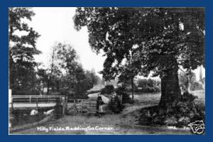 Hilly Fields, Beddington Corner