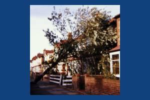 Manor Road, Mitcham: Storm Damage