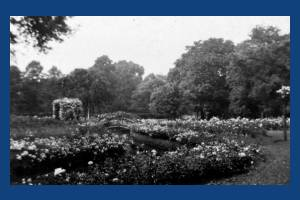 The Rose Garden, Morden Hall, Morden