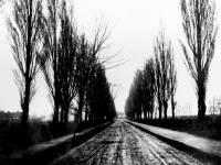 Poplar Road