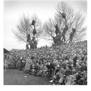 Before the stands were constructed, people would take to the trees to get a view of the Southern league football.
