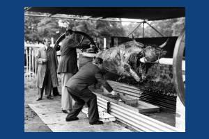 Coronation  Ox roast, Wimbledon Common